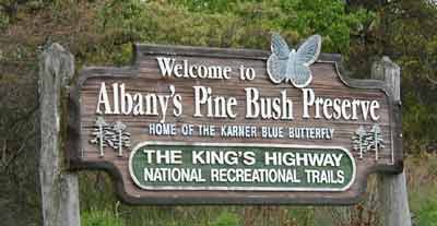 Albany Pine Bush Preserve, Albany County, New York.