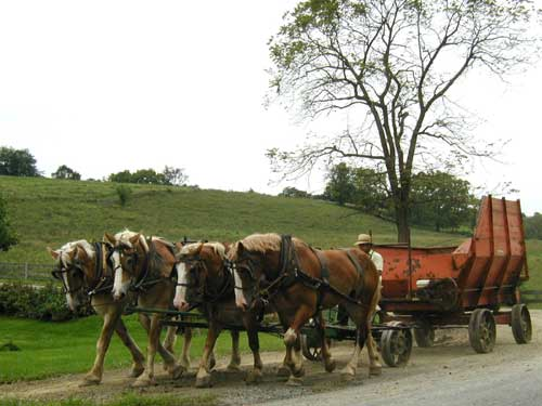 A team of four horses pull this cart for harvesting the fields.