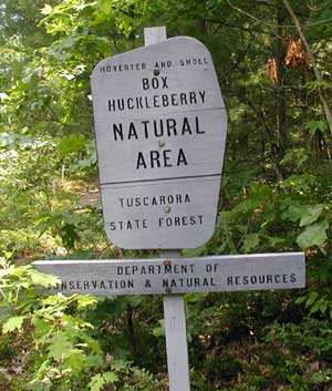 Hoverter and Sholl Box Huckleberry Natural Area in the Tuscarora State Forest, Perry County, Pennsylvania.