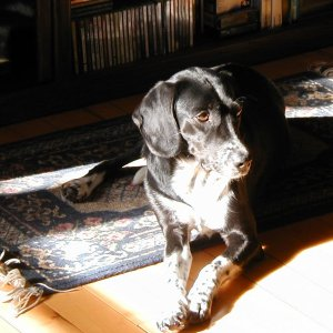 I think Shubert has the right idea - find a sunny spot and curl up!