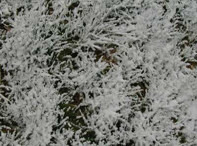 Snow sticking to the grass this morning.