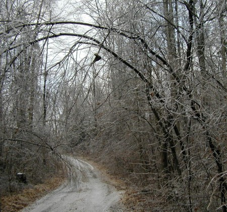 Ice-covered trees block the lane.