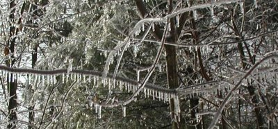 Every single tree limb has a coating of ice!