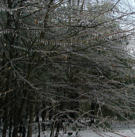 Icicles hang from all the tree limbs.