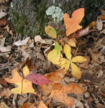 Pogonia orchids in the fall.