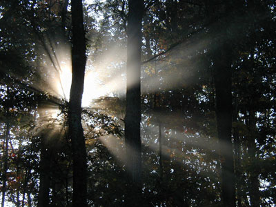 Sun shining low in the sky produces a starburst effect when viewed through the trees.