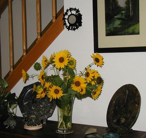 Sunny happy sunflowers!