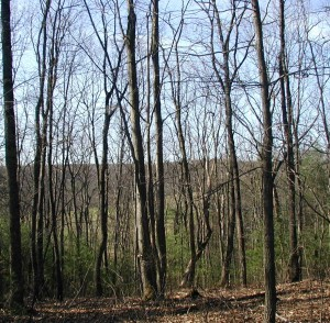 Barren trees on a ridge top in the mountains of Pennsylvania.