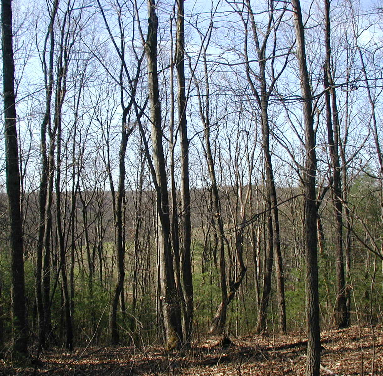bare tree submited images pic2fly