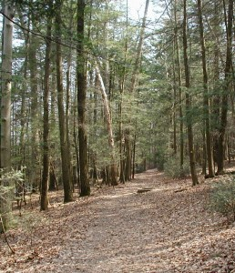 The lower section of the Fisherman's Trail is an easy walk.