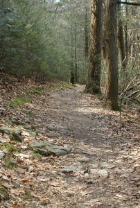 Watch for rocks on the Fisherman's Trail near the lake.