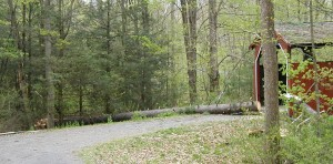 Felled white pine tree just misses the Clay Bridge.