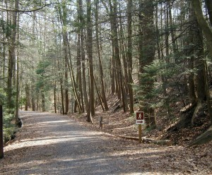 Wide trail at Day Use Area of Little Buffalo State Park.