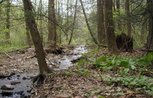 Creek at the location of Jack-in-the-Pulpits.