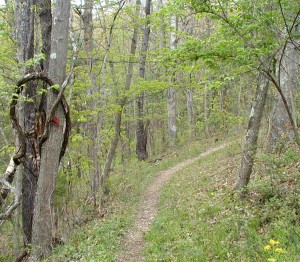 West end of the Middle Ridge Trail at Little Buffalo State Park.
