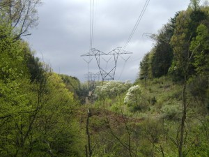 Lots of vegetation under the power lines.