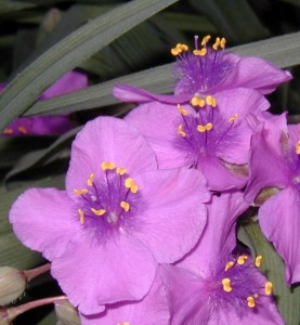 Beautiful purple blossoms.