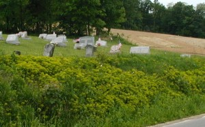 Yellow-green plants on hill at cemetery.