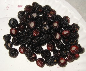 These black raspberry fruits were juicy and delicious.