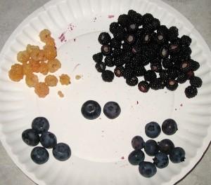Fruits of black raspberry, blueberry and white raspberry.
