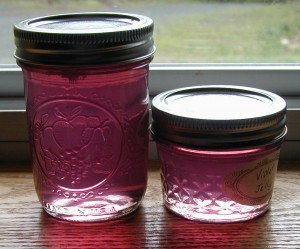 Jars of Violet Jelly made from Northern Downy Violets.