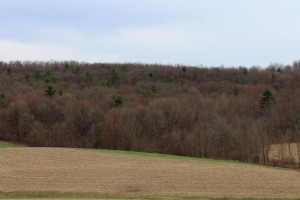 Mountain ridges are turning red with the opening of maple flowers.