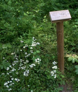 Trail Quiz Station - Learn Your Trees!