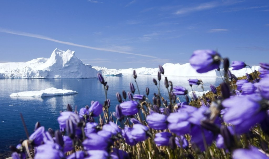 Alpine Flowers with Icy Glaciers