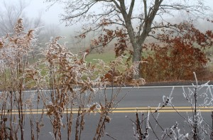 Ice Fog Envelopes Weeds