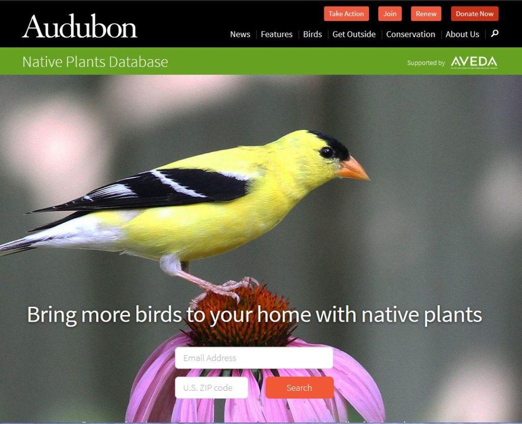 Goldfinch on a Purple Coneflower